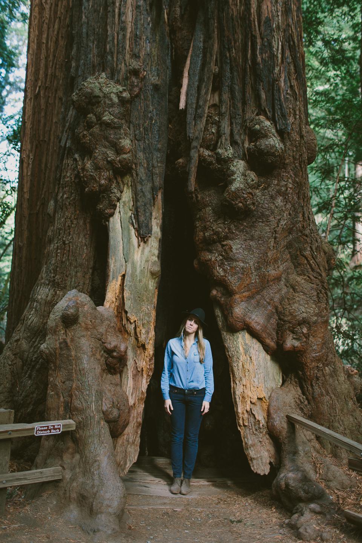 Muir Woods, Mill Valley, CA | Someplace Wild | www.someplacewild.com