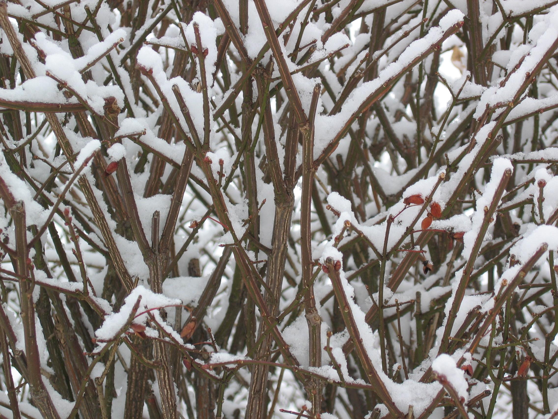 Winter5.JPG