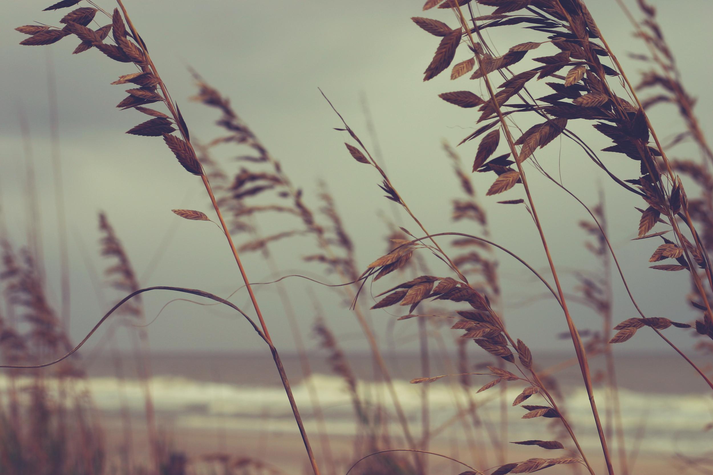 leaves in the wind.jpg
