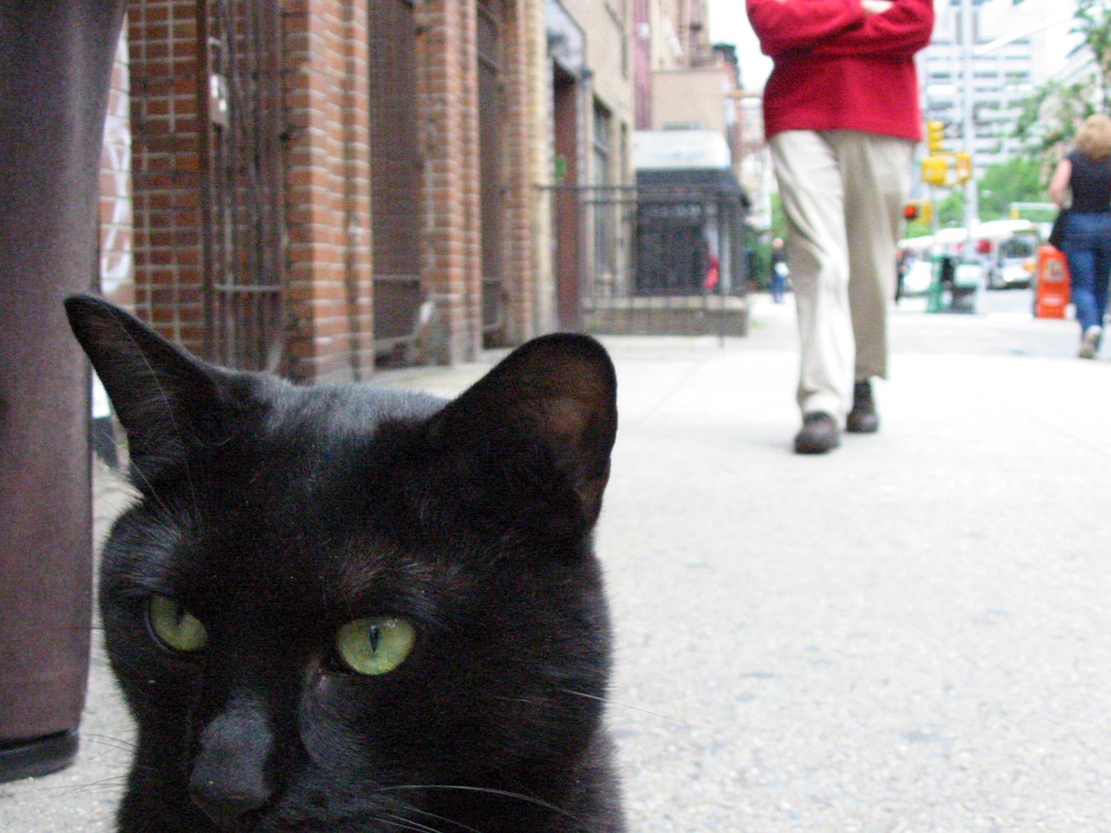 2nd Avenue Cat, New York City