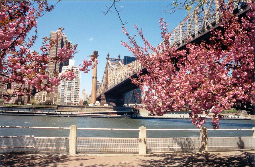 59th Street Bridge, Roosevelt Island, New York City