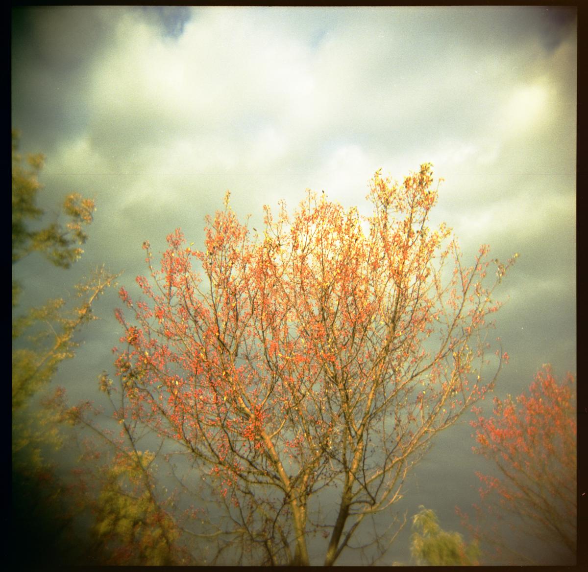 Blossoms, Hudson New York