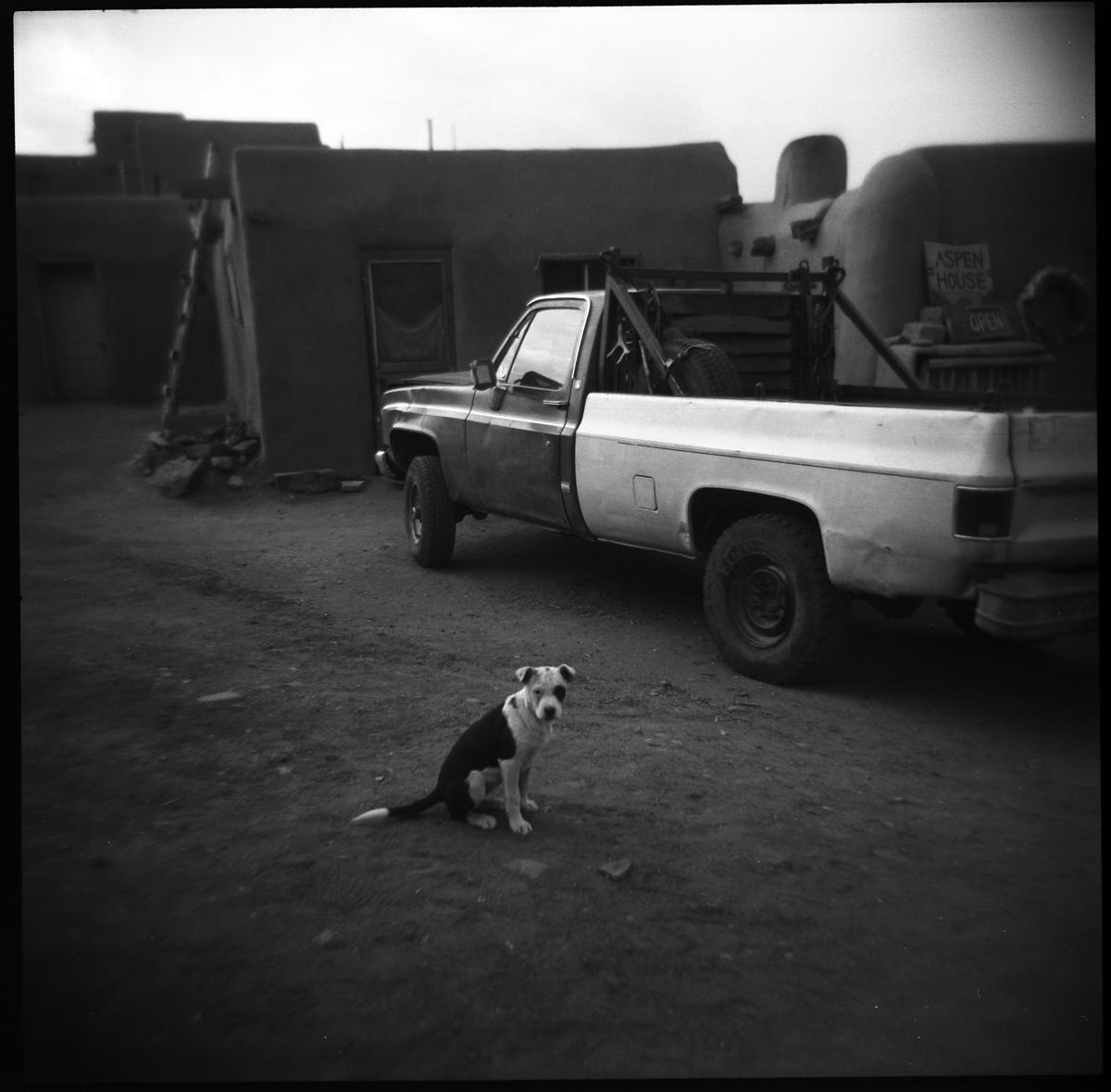 Dog, Taos, New Mexico