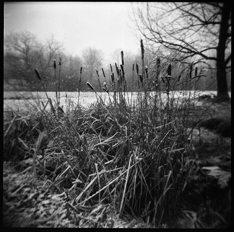Snow Reeds | Ghent NY