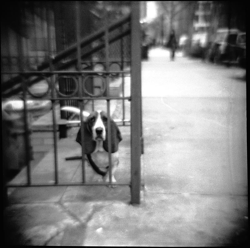 East Village Dog |  New York, NY