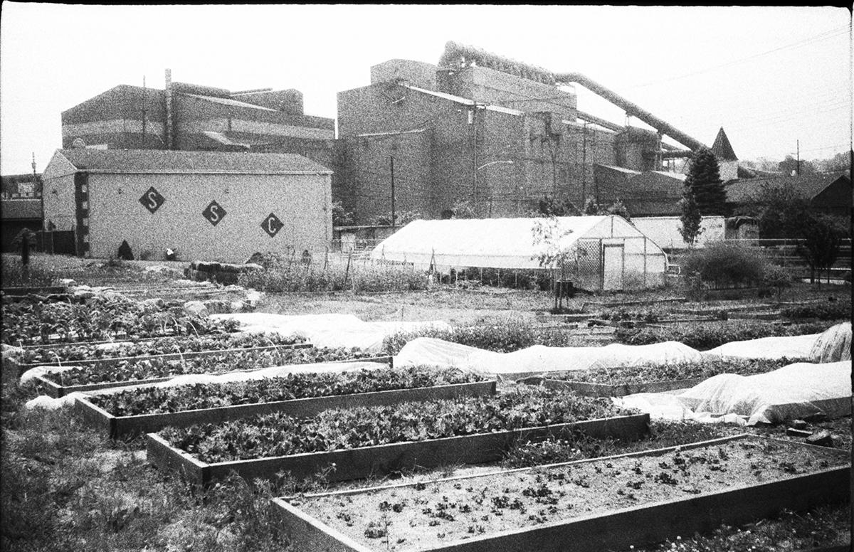 Raised Community Gardens | Braddock Avenue, Braddock PA