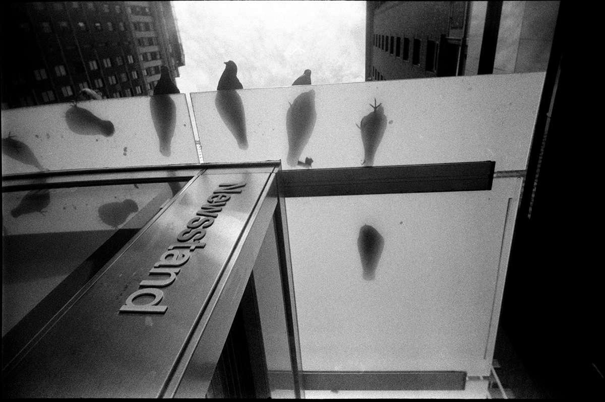 PIGEONS ON THE NEWSSTAND | MIDTOWN, NEW YORK, NY