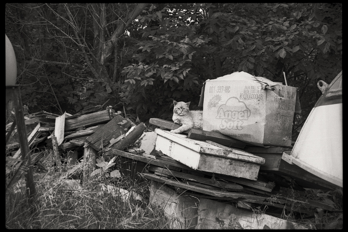 Trash Cat | Trash Pile | Wheeling, West Virginia