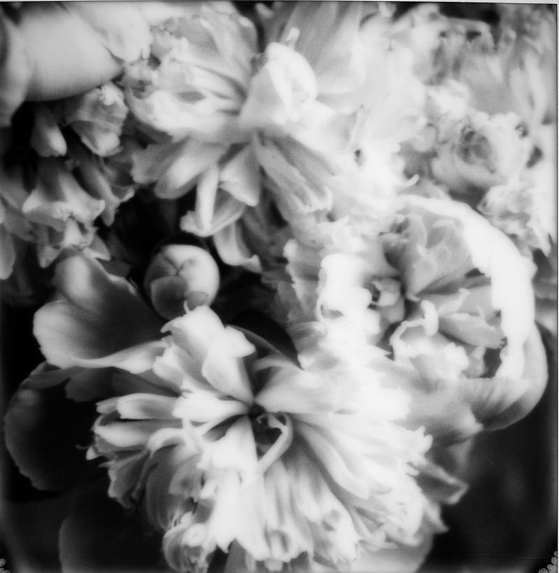 Bloom | Hudson NY