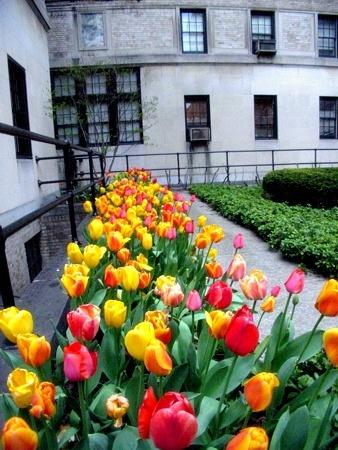 Tulip Road | 9th Street