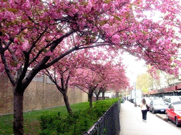 Bleecker Bloom | Bleecker Street