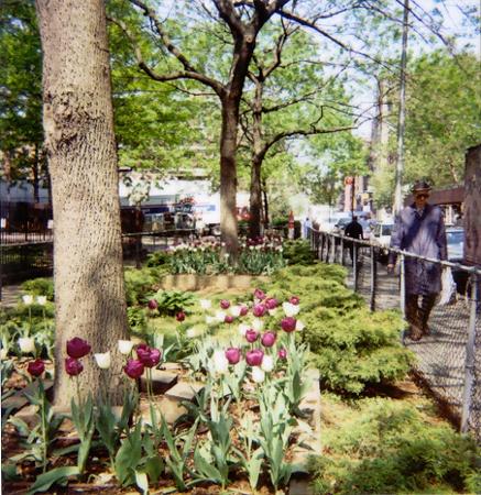 Tulips | Bleecker, New York City