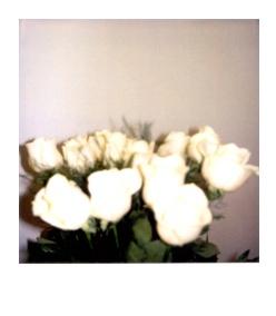 polaroid195.jpg