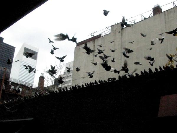 Birds | 3rd Ave & 59th Street