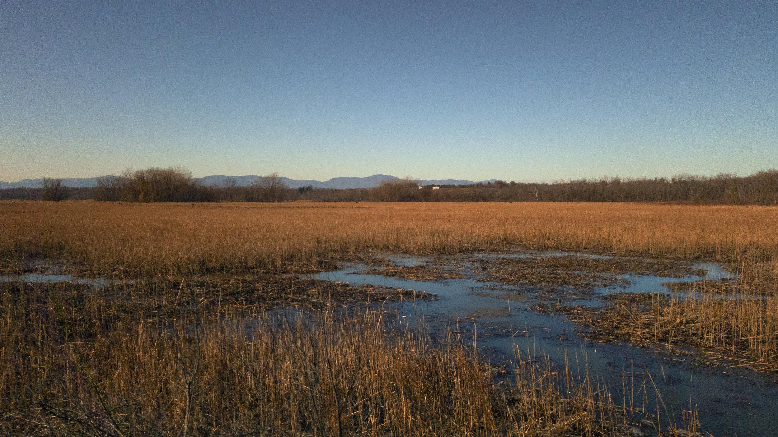 Hudson River Wetlands, near Stockport NY
