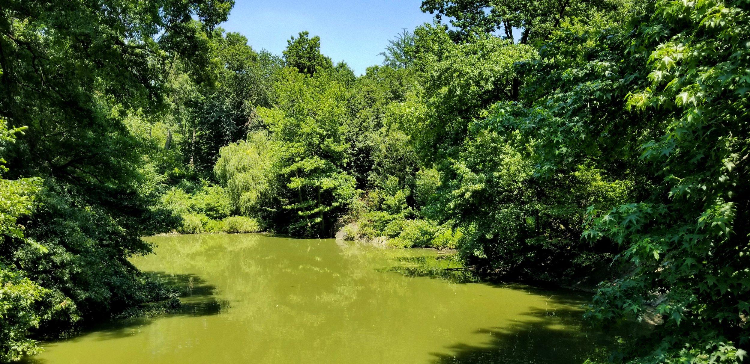 Bank Rock Bay | Central Park, New York, New York