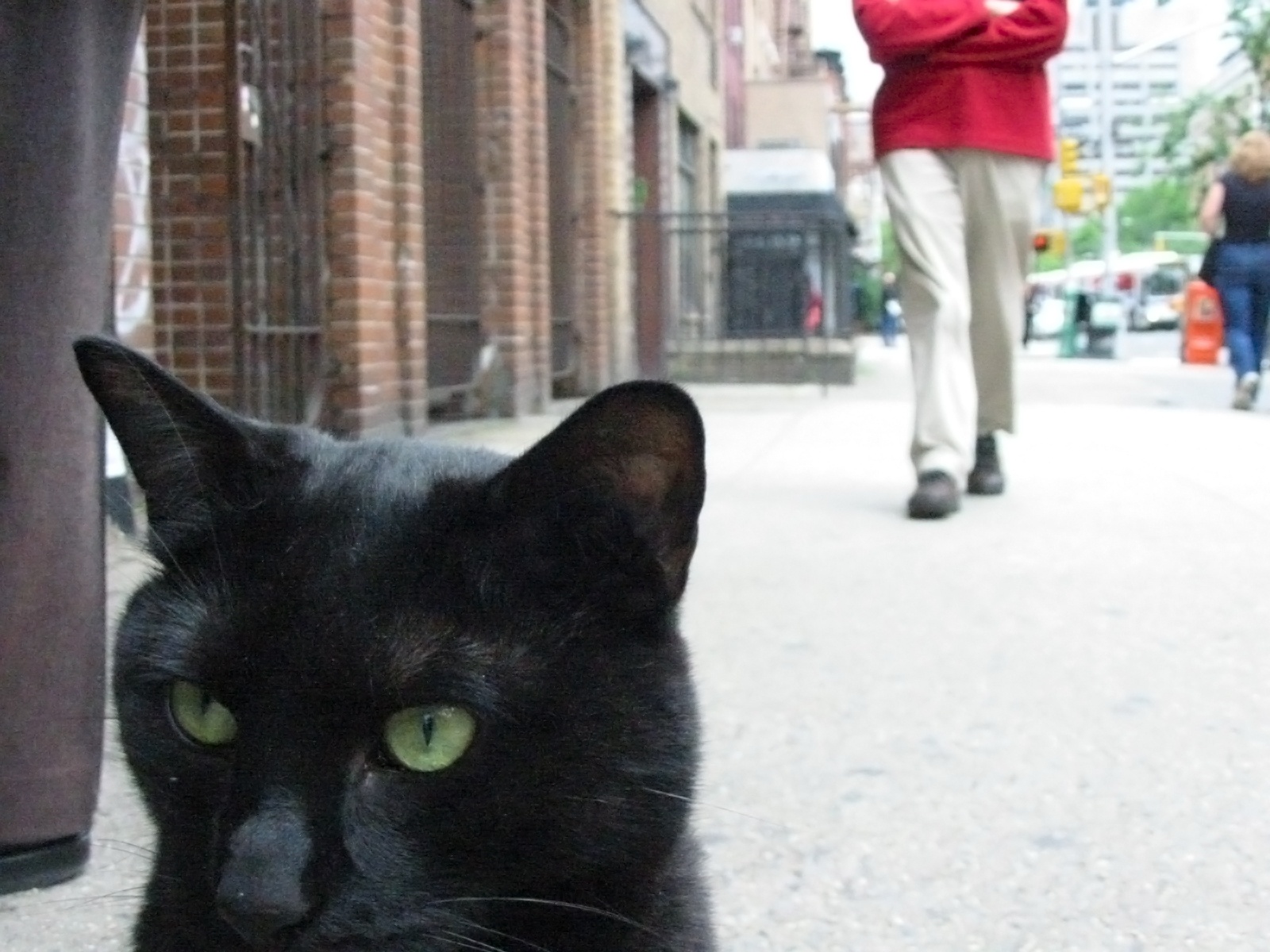 Black Cat on 2nd Avenue