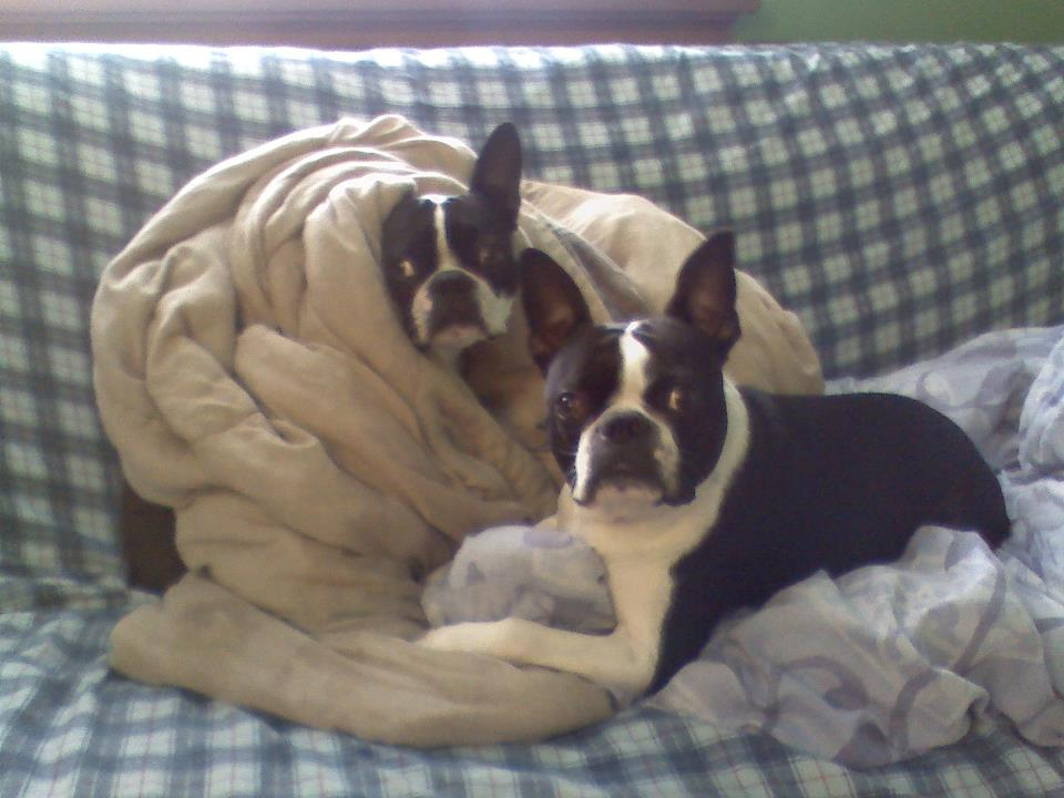 """We're gonna build a blanket fort next!"""