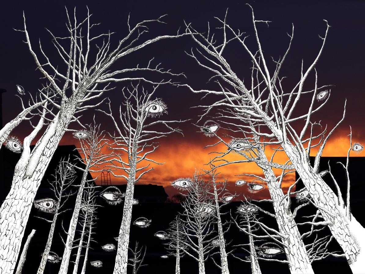 trees_skyWEB.jpg