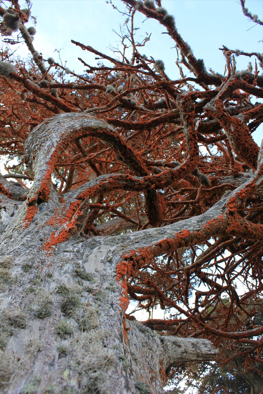 photo_tree_carotine_web.jpg