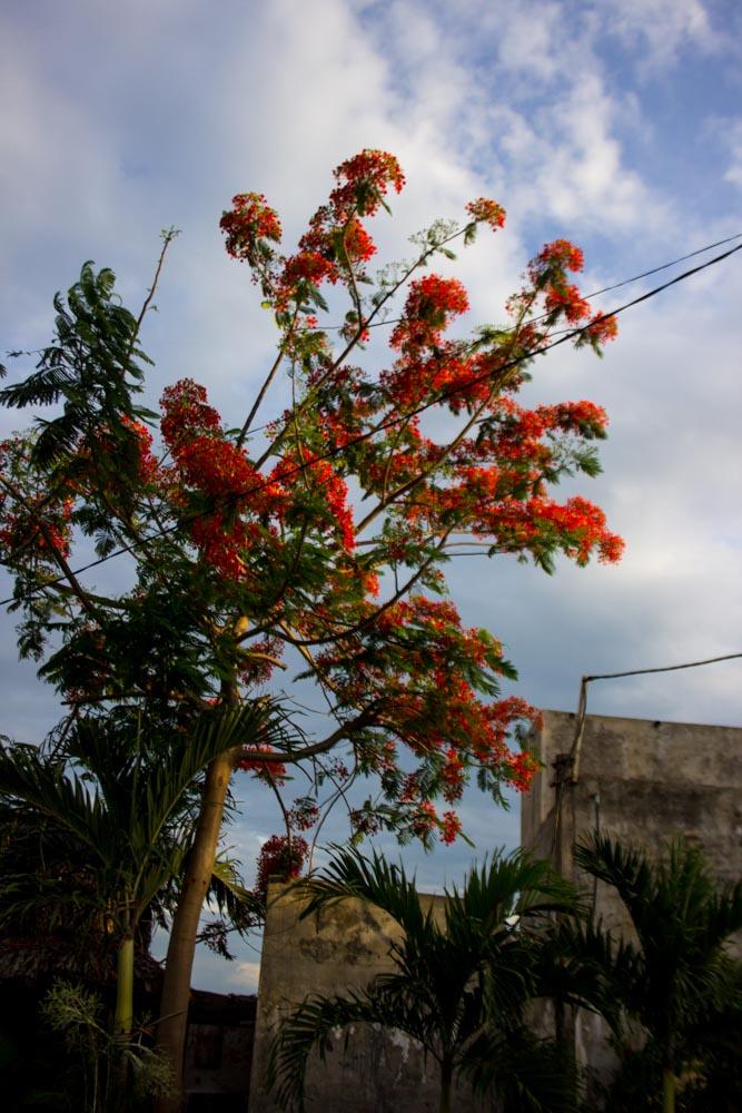 Tropical colour in Hoi An.