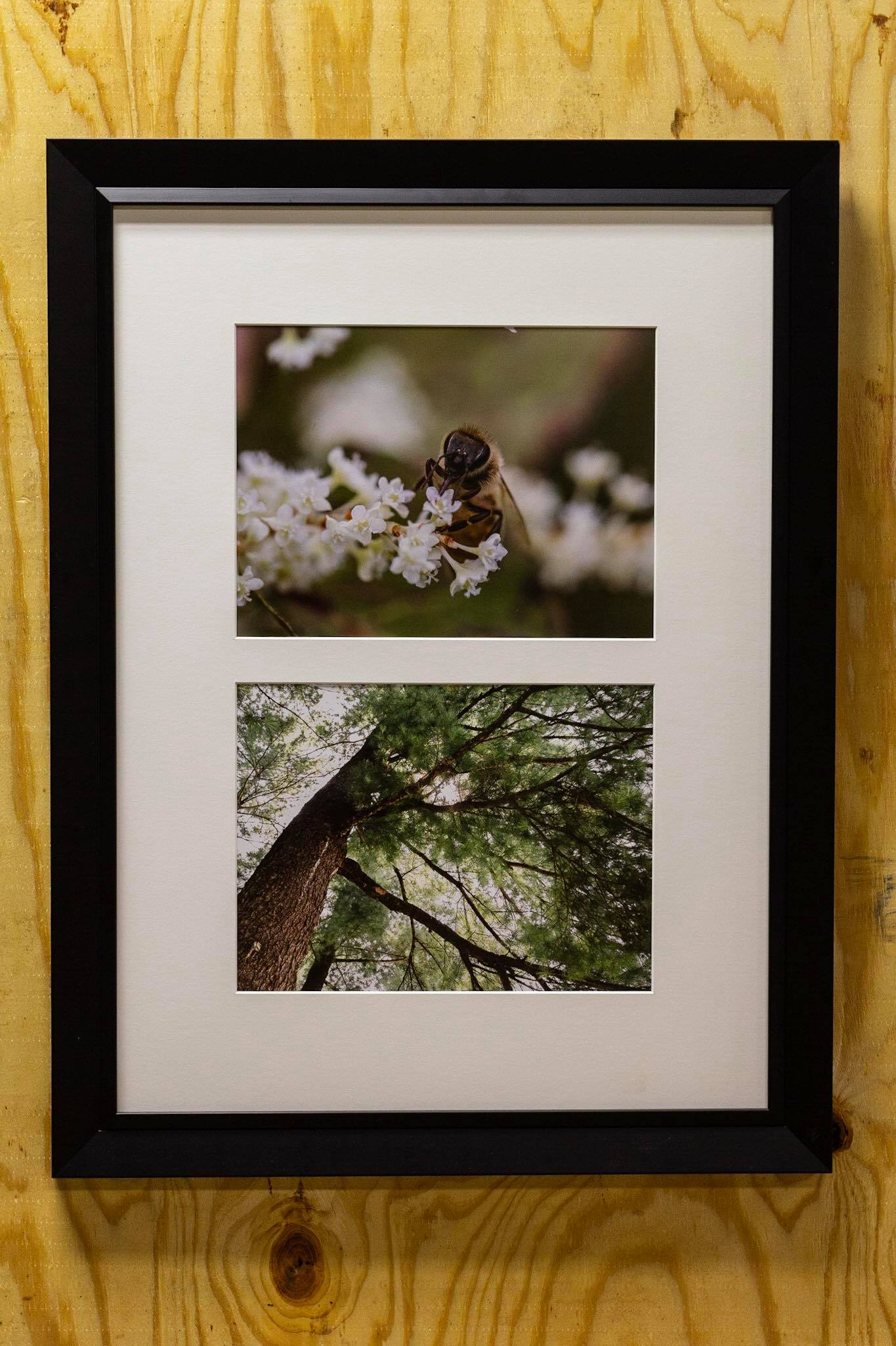 Bee and Tree photos by Anon.jpg