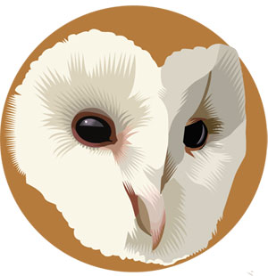 Barn Owl, Q. Cassetti, 2013, Adobe Illustrator, CS5