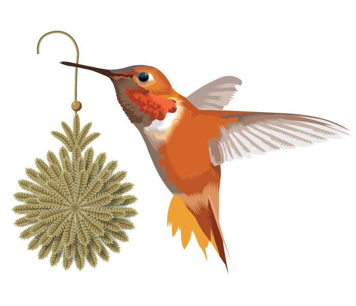 v2 hummingbird-01.jpg