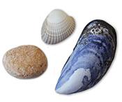 shell-stone3.jpg