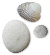 shell-stone1.jpg