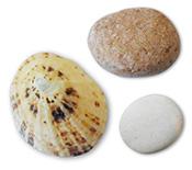 shell-stone2.jpg
