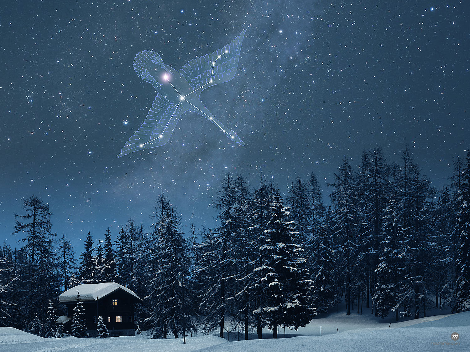 Cygnus constellation in night sky over a snow covered house and trees, Switzerland  © Masterfile