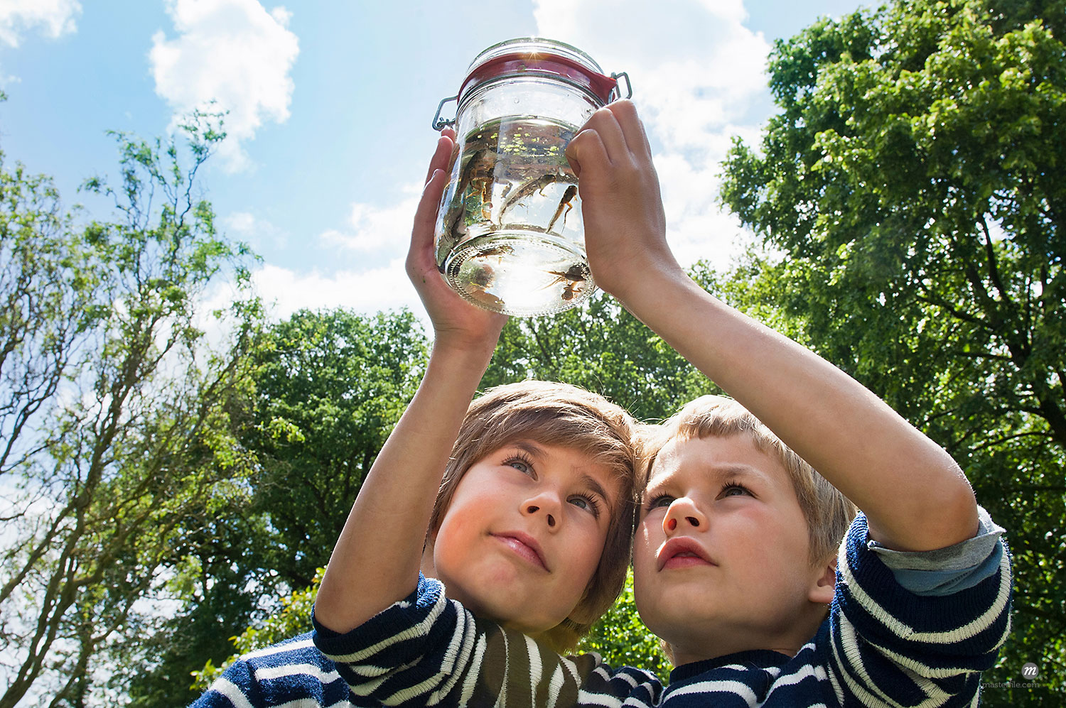 Two boys looking at tadpoles in a glass jar © Masterfile