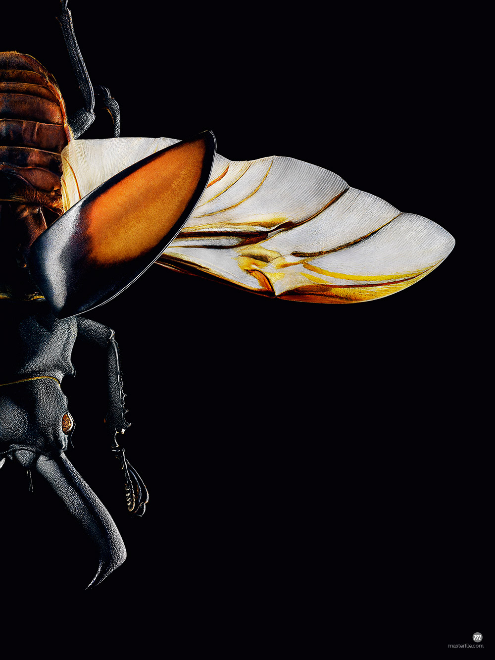 Close-Up of Insect © oliv / Masterfile
