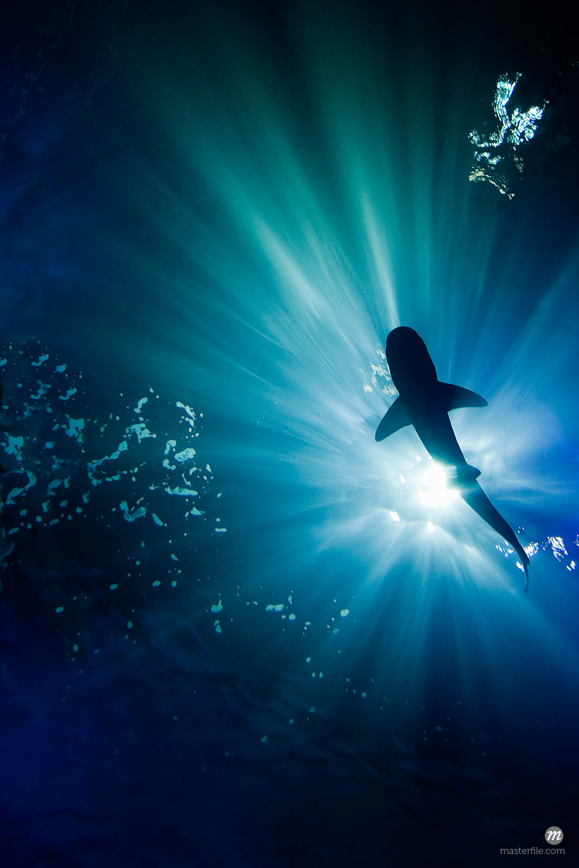 Shark under water © Masterfile
