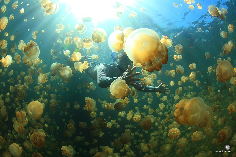 Jellyfish, Palau , Oceania © Aflo Relax / Masterfile