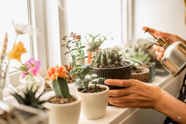 Girl tending plants on a sunny windowsill