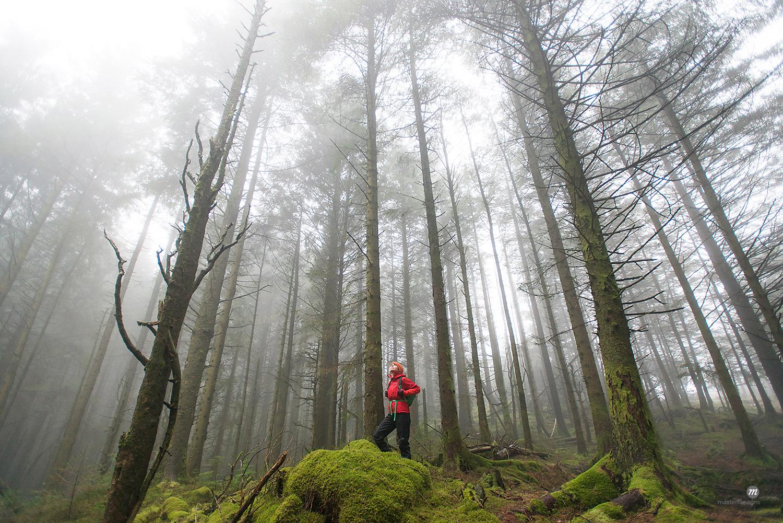 Walking in Beddgelert forest in Snowdonia, Wales, United Kingdom  © Masterfile