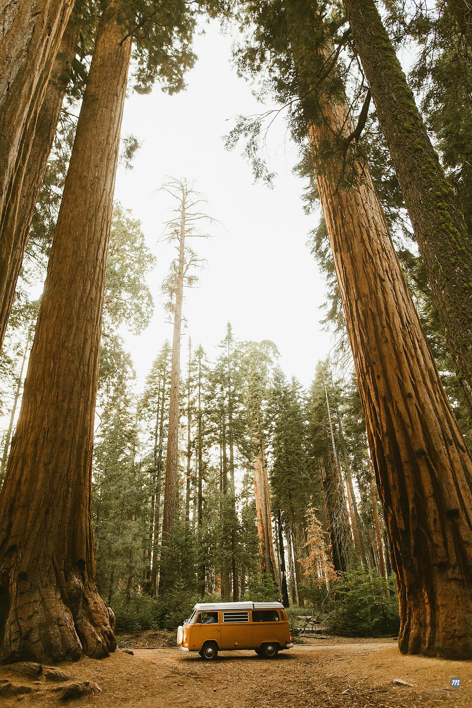 Camper van under sequoia tree, Sequoia National Park, California, USA  © Masterfile