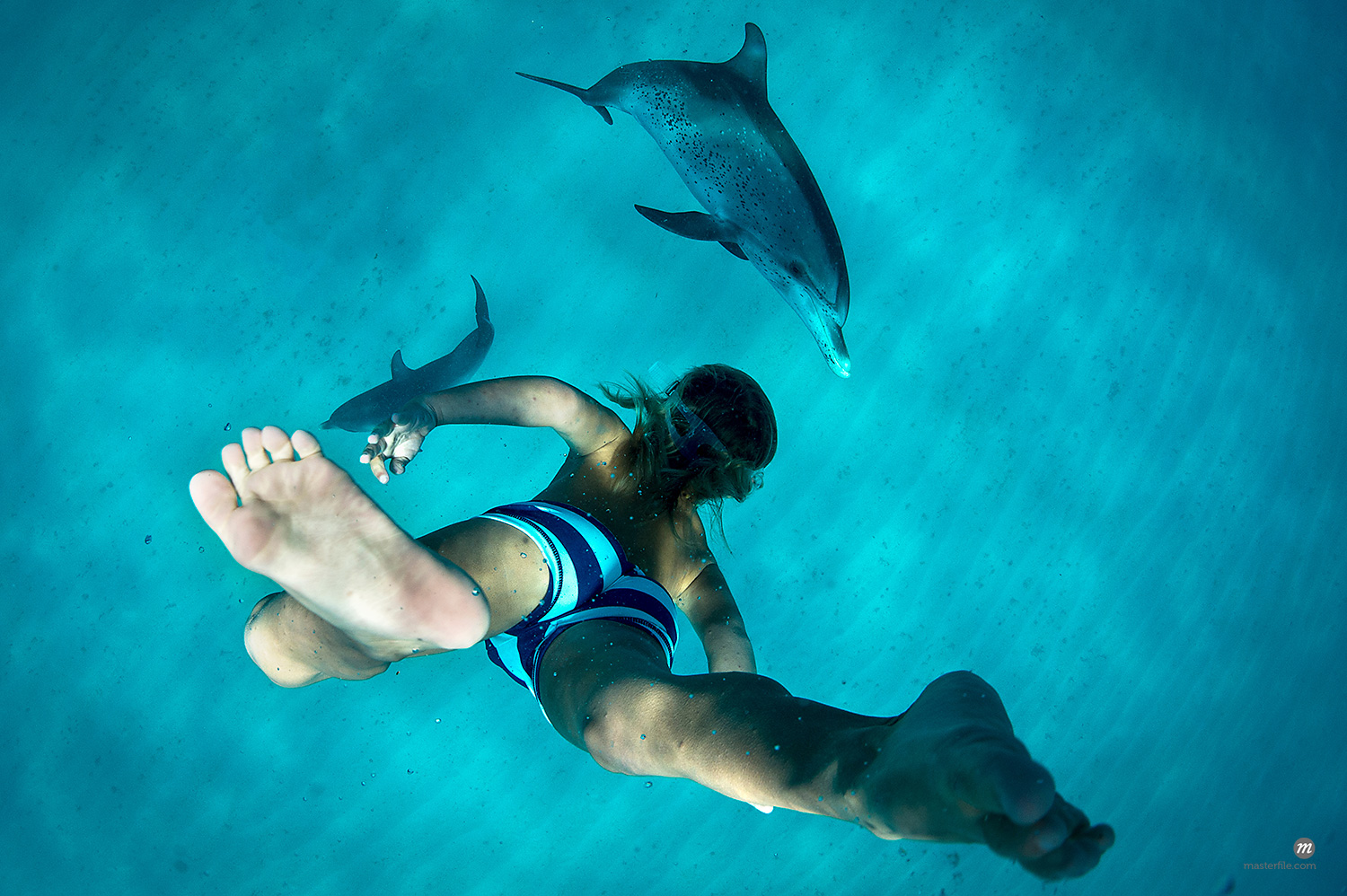 Boy free diving with dolphin s © Masterfile