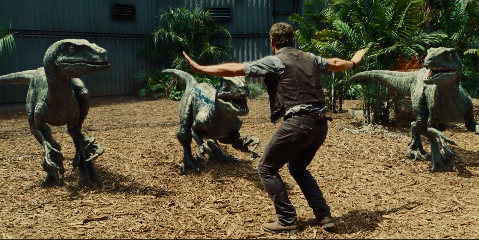 Pratt trains a bunch of Raptors in  Jurassic World