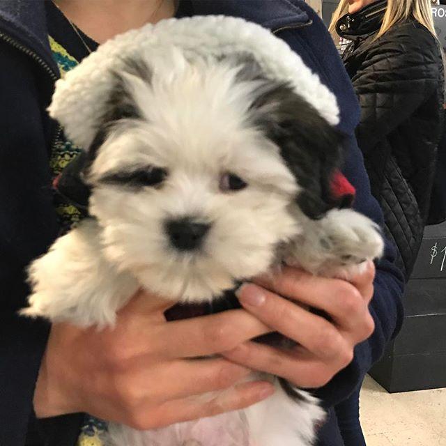Meet Moki our newest neighbor! What a smooooosh #DogsRule