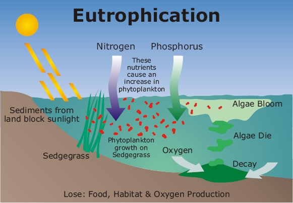 eutroph.jpg