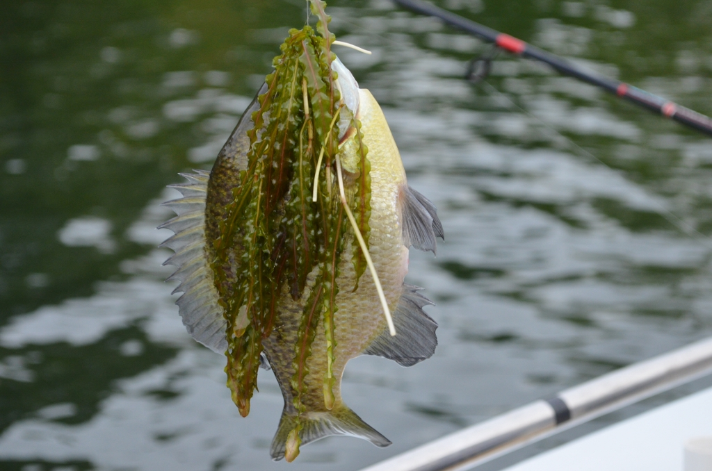 AJP_3238M Fishing.jpg