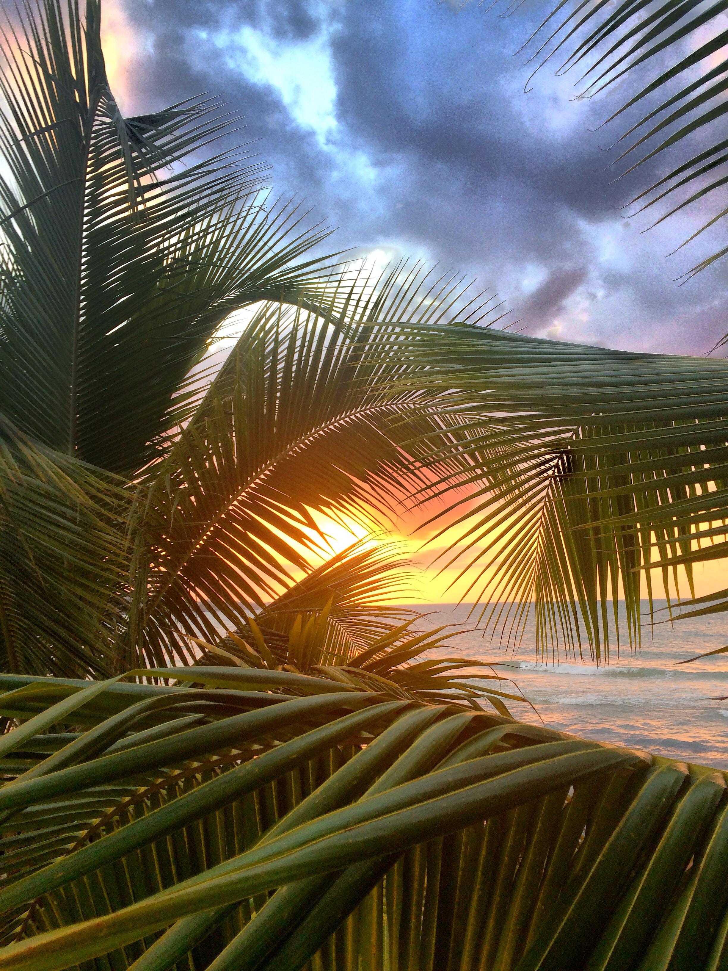 palmsolnedgång.jpg