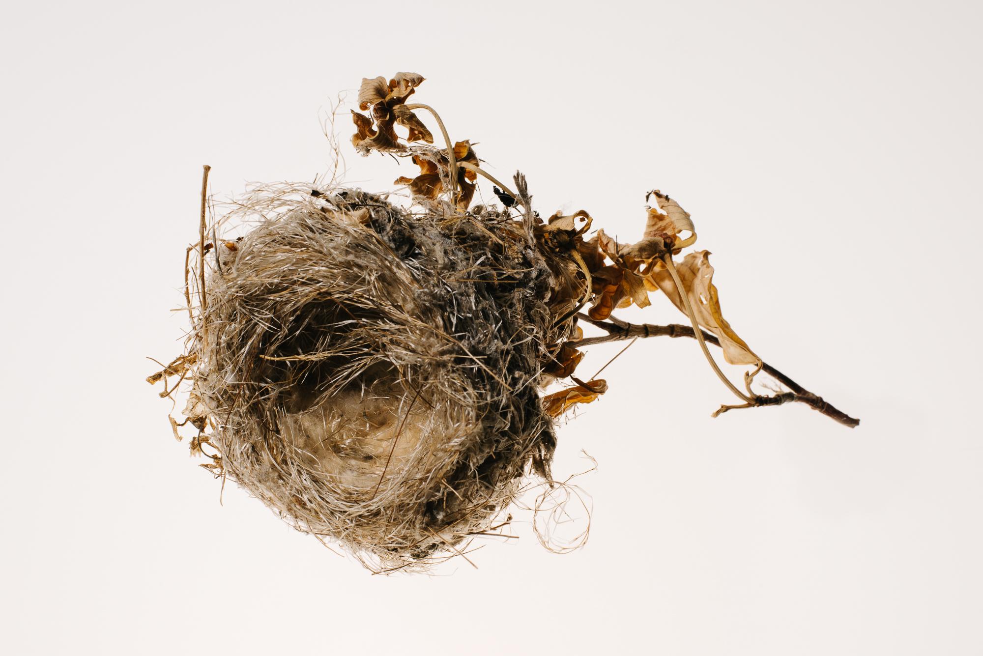 Bird_Nests-0009-7.jpg