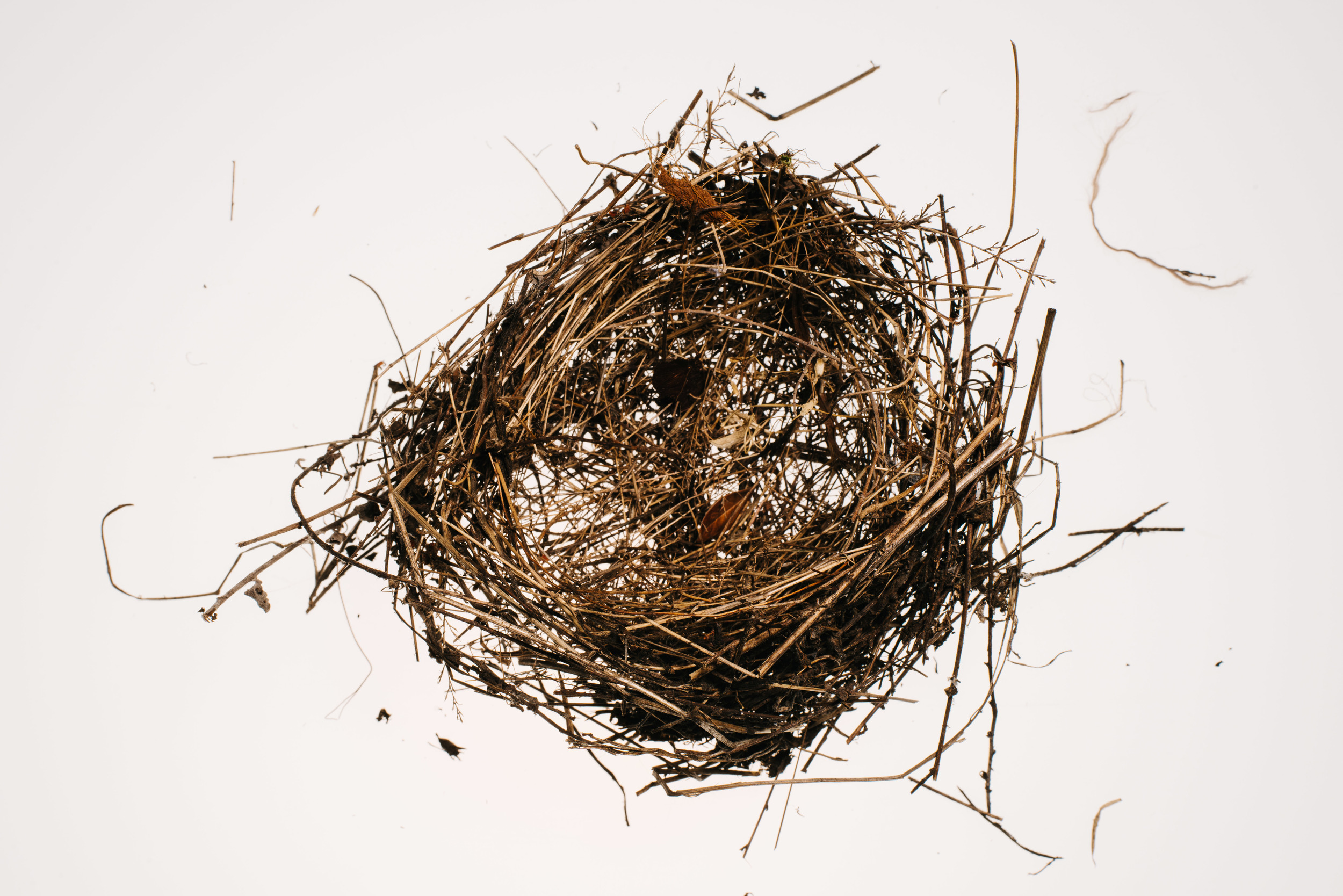 Bird_Nests-0023.jpg