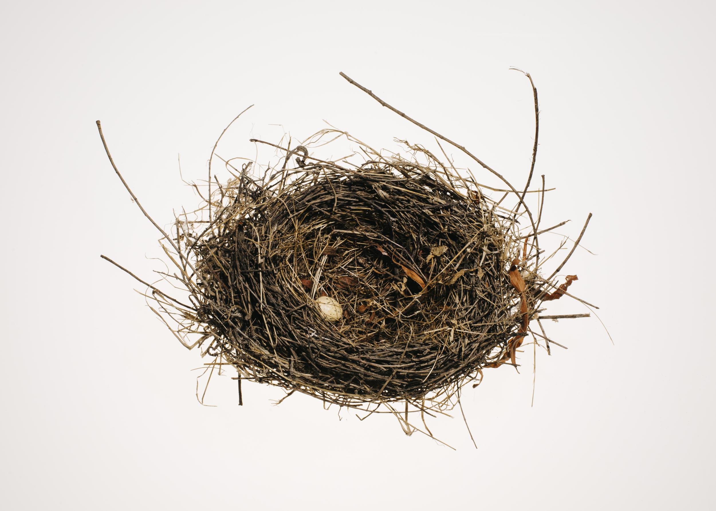Bird_Nests-0051-2.jpg