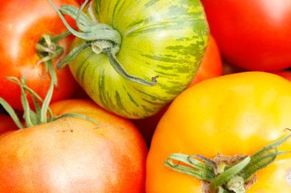 tomatoes-425.jpg