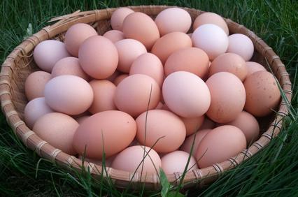 eggs3_basket-426.jpg